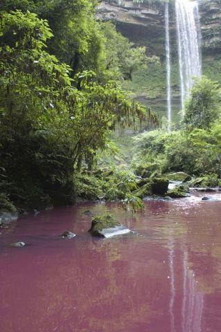 Rio Dona Luiza dentro do Parque Natural Municipal Mata Atlântica. Foto: Arquivo Apremavi.