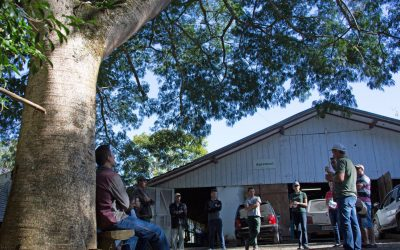 Timbaúva, a árvore que tem orelhas