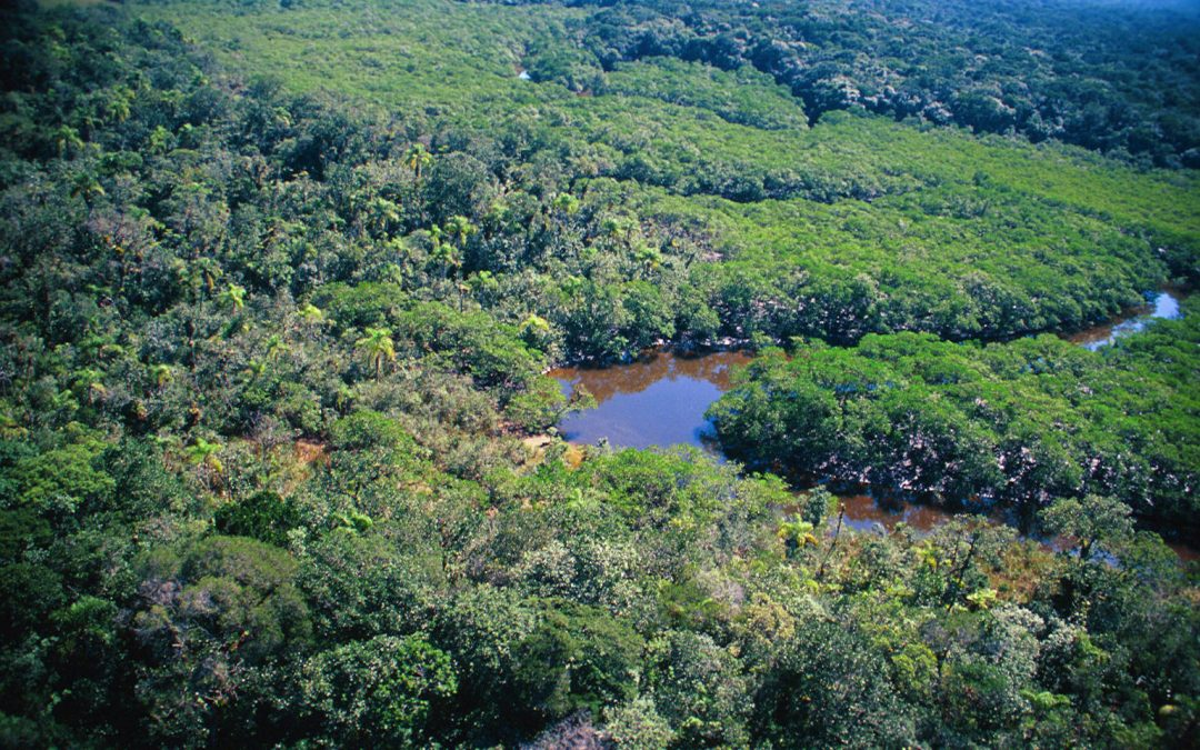 Continuidade do julgamento das ADIs do Código Florestal ainda não tem nova data
