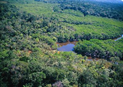 Manguezal transicao para floresta - Foto Wigold B. Schaffer.