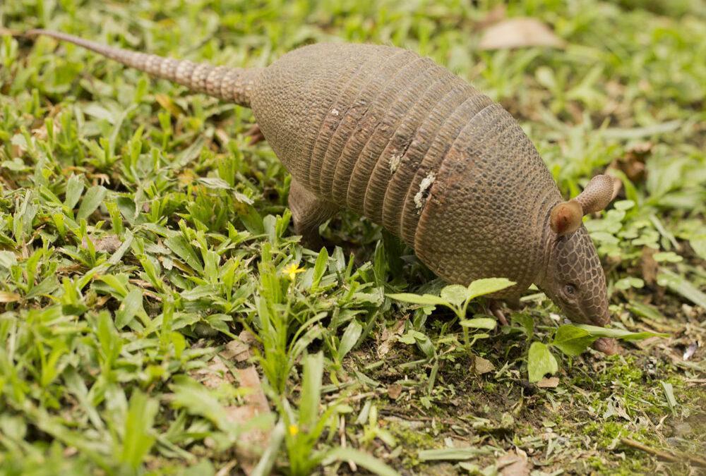 Entenda porque o PL 6.268/16 é uma ameaça para a Fauna brasileira