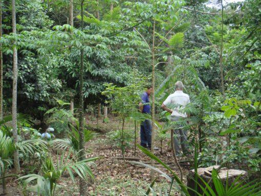 Enriquecimento Ecológico de Florestas Secundárias
