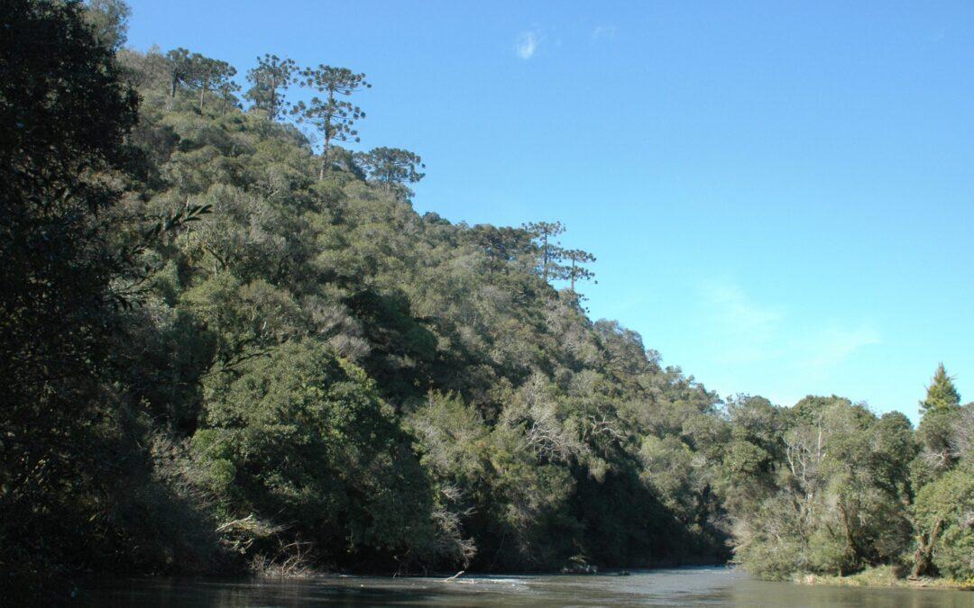 Parque Nacional das Araucárias comemora 7 anos