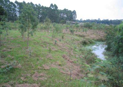 Plantio no Parque Mata Atlântica, 2003.