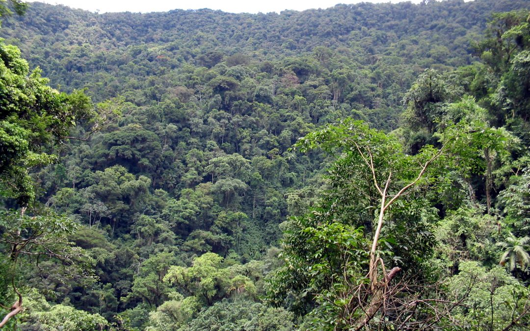Código Florestal sob ataque: NÃO à MP 867/2018