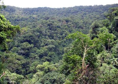 Projeto PSA. Remanescentes de Floresta.