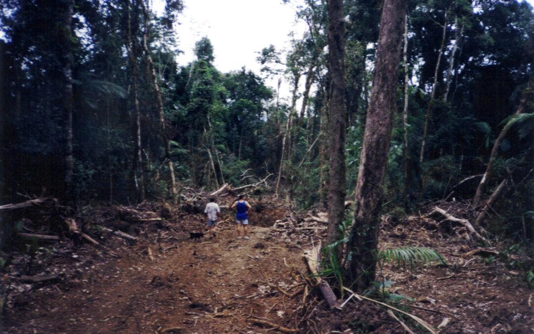 Organizações cobram fortalecimento do MPF contra crime ambiental na Amazônia
