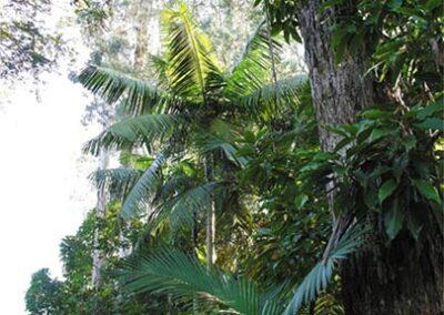 Enriquecimento de Florestas Secundárias