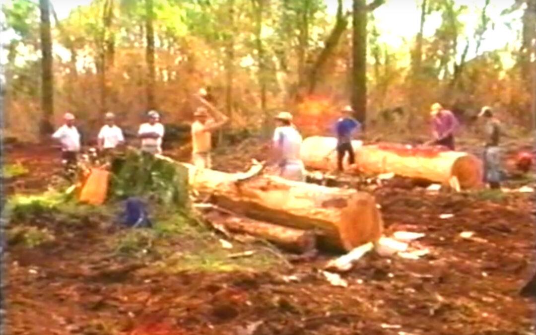 Mata Atlântica no Paraná – Destruição e Impunidade (1995)