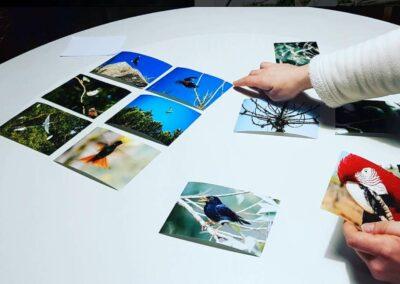 """Assim começou a montagem da exposição """"Belezas da Mata Atlântica"""". Foto: Miriam Prochnow."""