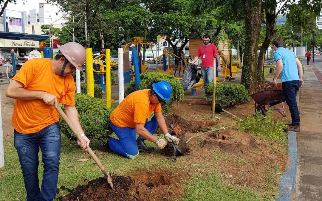 Apremavi ajuda a arborizar praça central em Rio do Sul
