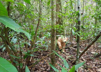 Encontro do Diálogo Florestal. Foto: Miriam Prochnow.