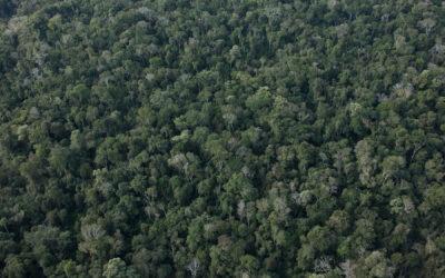 Atlas dos Remanescentes Florestais da Mata Atlântica de Santa Catarina é atualizado