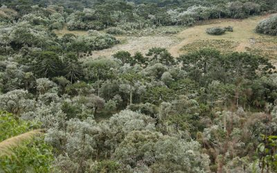 Apremavi apoia manifesto contra propostas de campanha que atacam meio ambiente