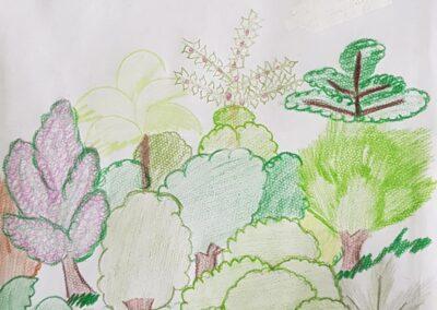 """Desenho de Kaio Burato para o concurso """"O bosque da escola"""". Foto: Miriam Prochnow."""