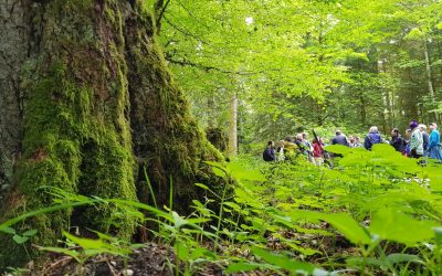 Apremavi participou de workshop sobre restauração de paisagens em florestas tropicais
