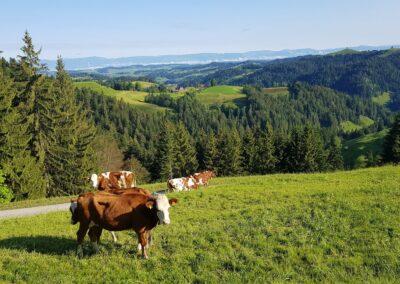 Paisagens de Lüderenalp, Suíça. Foto: Miriam Prochnow.