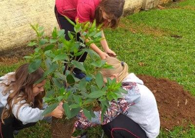 Plantio de mudas de árvores nativas.