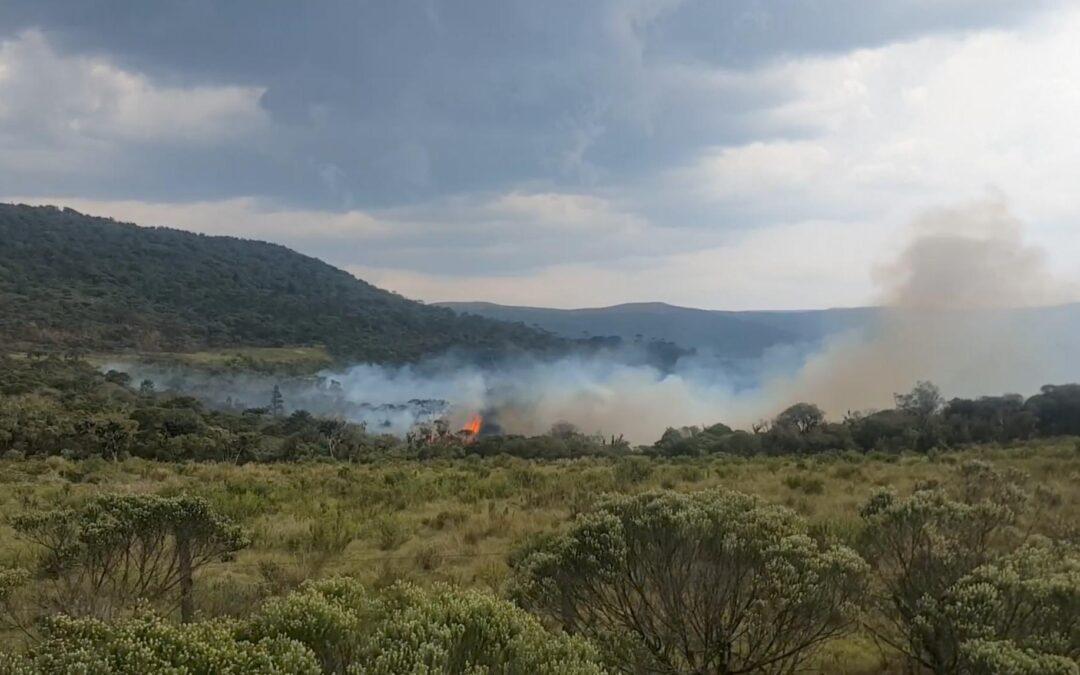 A natureza brasileira não pode continuar em chamas