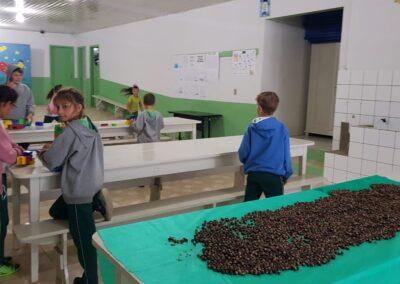Coleta de sementes no Bosque da Escola. Foto: Miriam Prochnow.