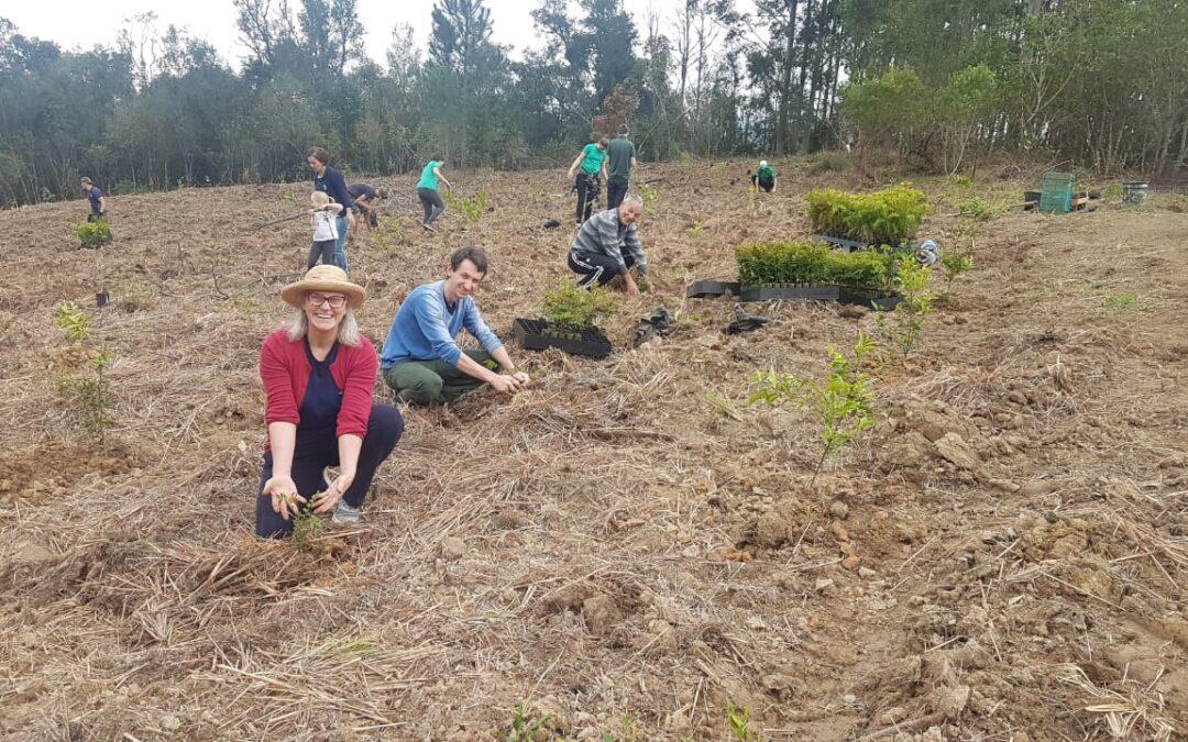 Plantio de bosque celebra parceria da Apremavi com a Ellepot