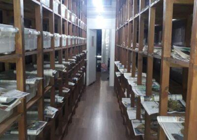 Coleção do Herbário Alto Vale do Itajaí onde as exsicatas estão depositadas.