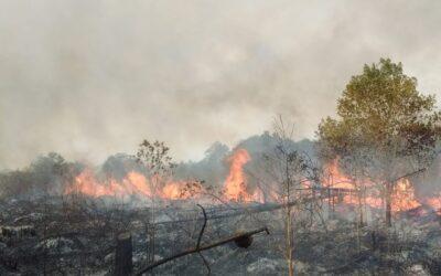 Nota sobre incêndios no Parque Estadual da Serra do Tabuleiro é entregue ao governo do Estado