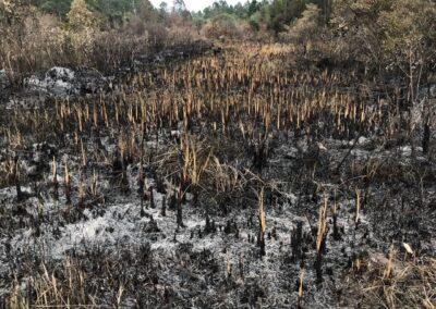PE da Serra do Tabuleiro após incêndio do dia 11/09. Foto: Arquivo RMA.