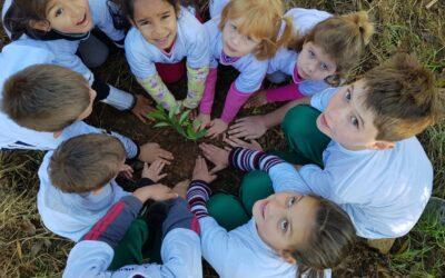 Bosques de Heidelberg uma história de parcerias