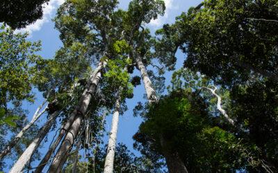 Apremavi e Bloom Bits iniciam parceria para plantar bosques de árvores nativas