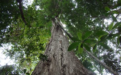ONGs se posicionam sobre a crise do desmatamento e queimadas na Amazônia na COP 25