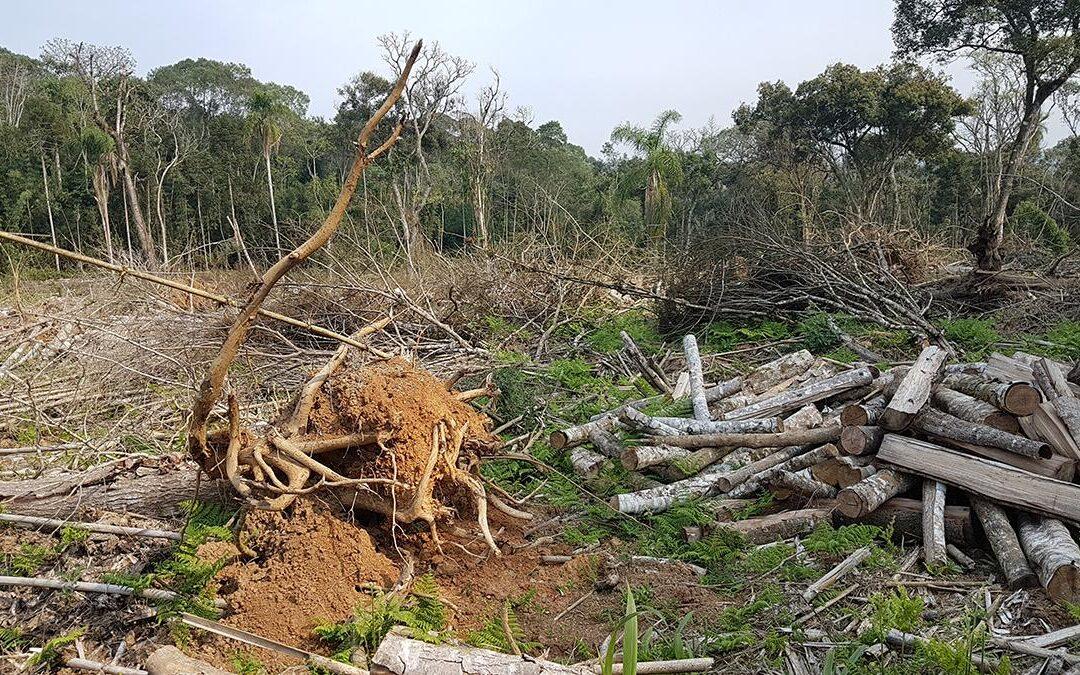 Ministério do Meio Ambiente articula decreto para destruição da Mata Atlântica
