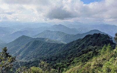 PL 0105.9/2020: nova ameaça à Mata Atlântica em Santa Catarina