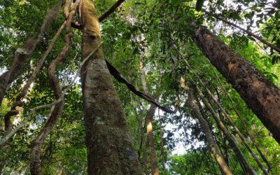 Entidades propõem moratória ao desmatamento na Amazônia