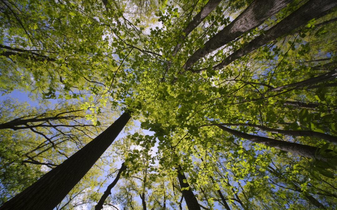 Dia da Árvore: ainda há o que comemorar?