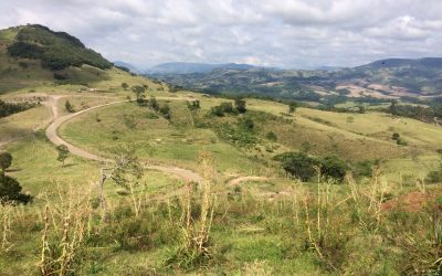 Programa Matas Sociais ajuda a restaurar mais 8 hectares em Sapopema (PR)