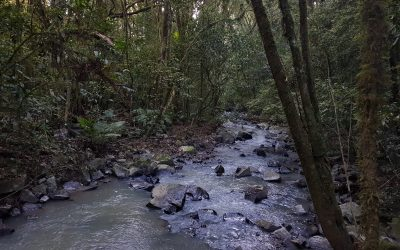 Sem água não existe vida, precisamos valorizar esse bem precioso