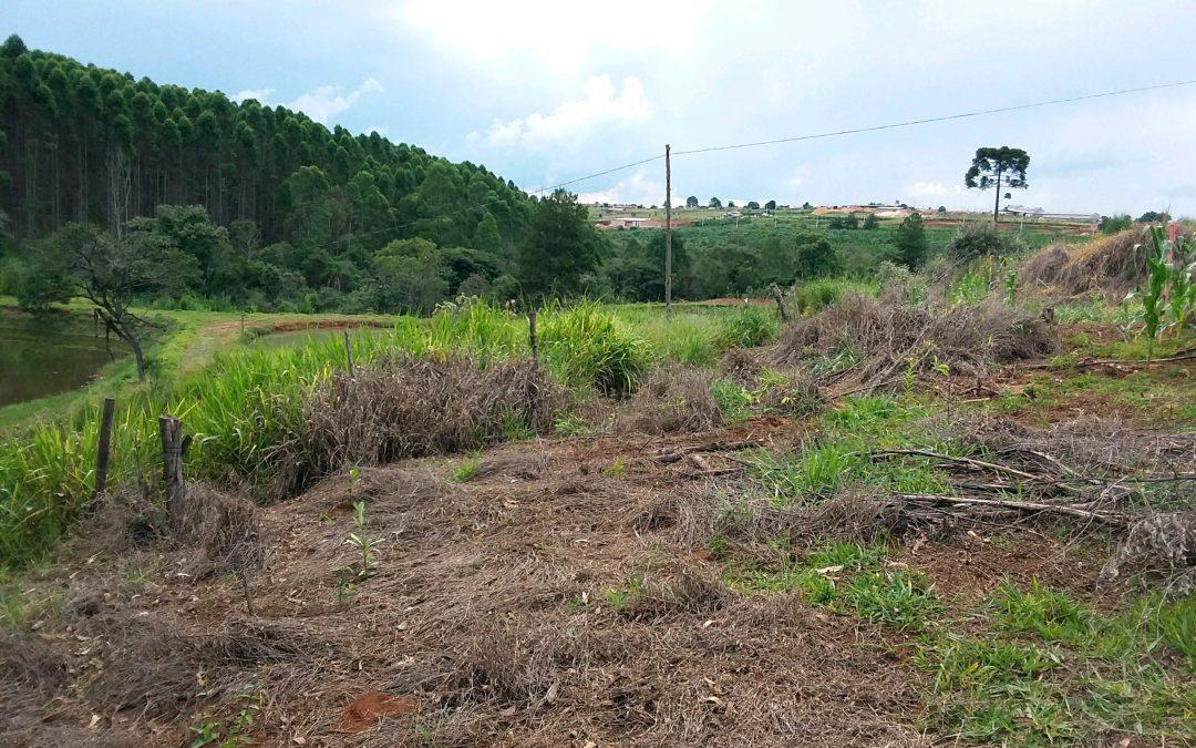 Programa Matas Legais auxilia produtor a restaurar APP em Curiúva (PR)