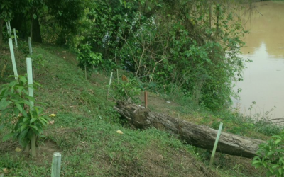 Empresa de seguros promove plantio às margens do Rio Itajaí