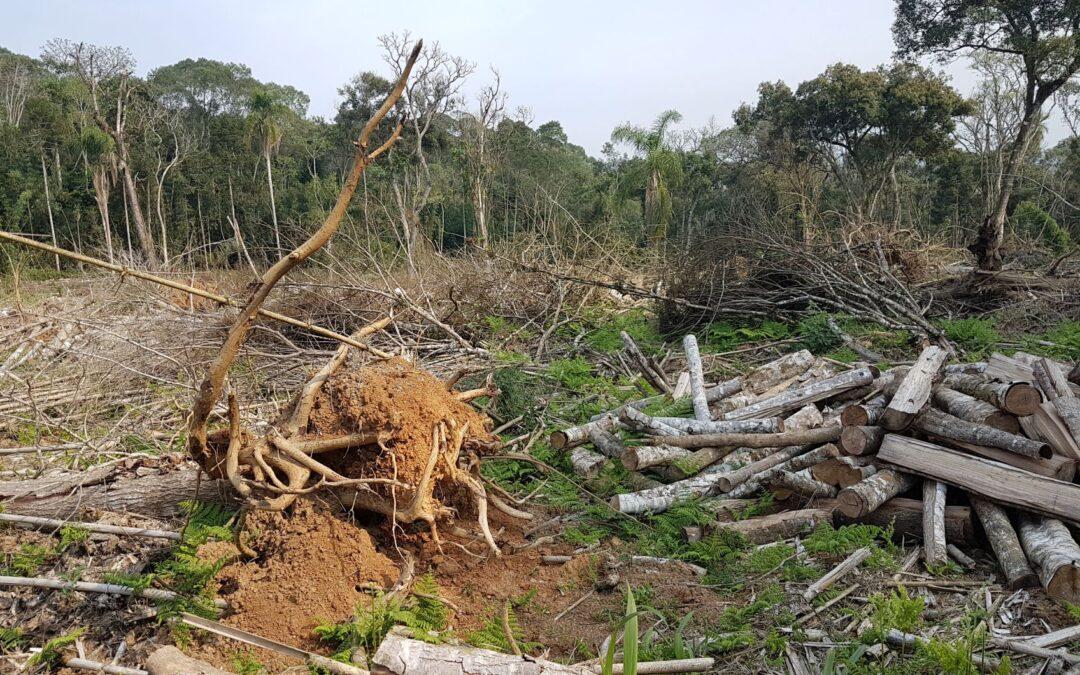 Desmatamento sobe e SC é o 4° estado do ranking segundo Atlas da Mata Atlântica