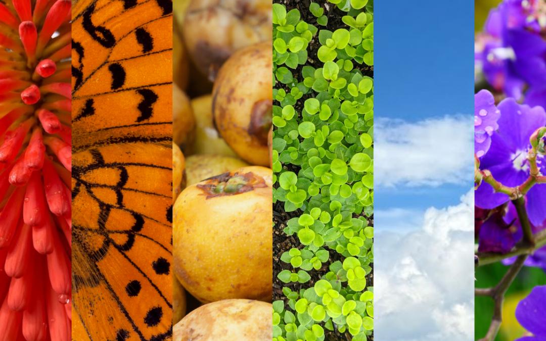 Diversidade na luta pela biodiversidade