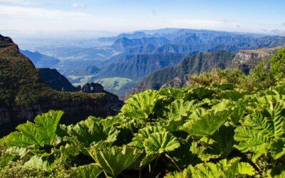 Parque Nacional de São Joaquim celebra 60 anos