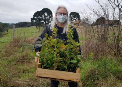 MST e Apremavi plantam árvores