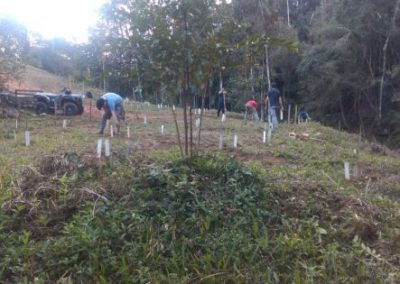 Plantio nas áreas atingidas